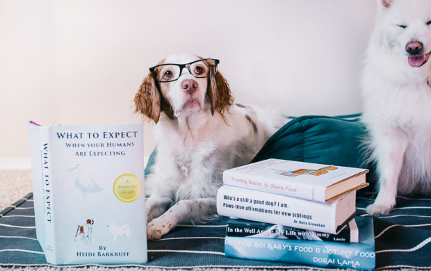 A DOGgone great announcement!